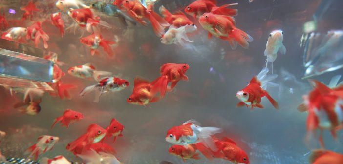 aquarium-seismart